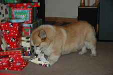 Kirby unwrapping presents